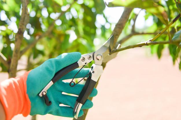 A importância da periodicidade na poda de árvores